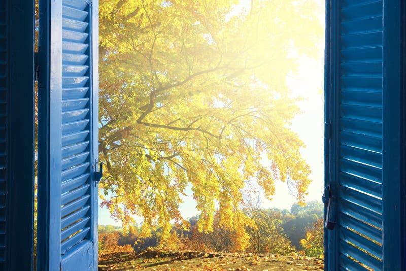 Fönster som faller trädgård royaltyfria bilder