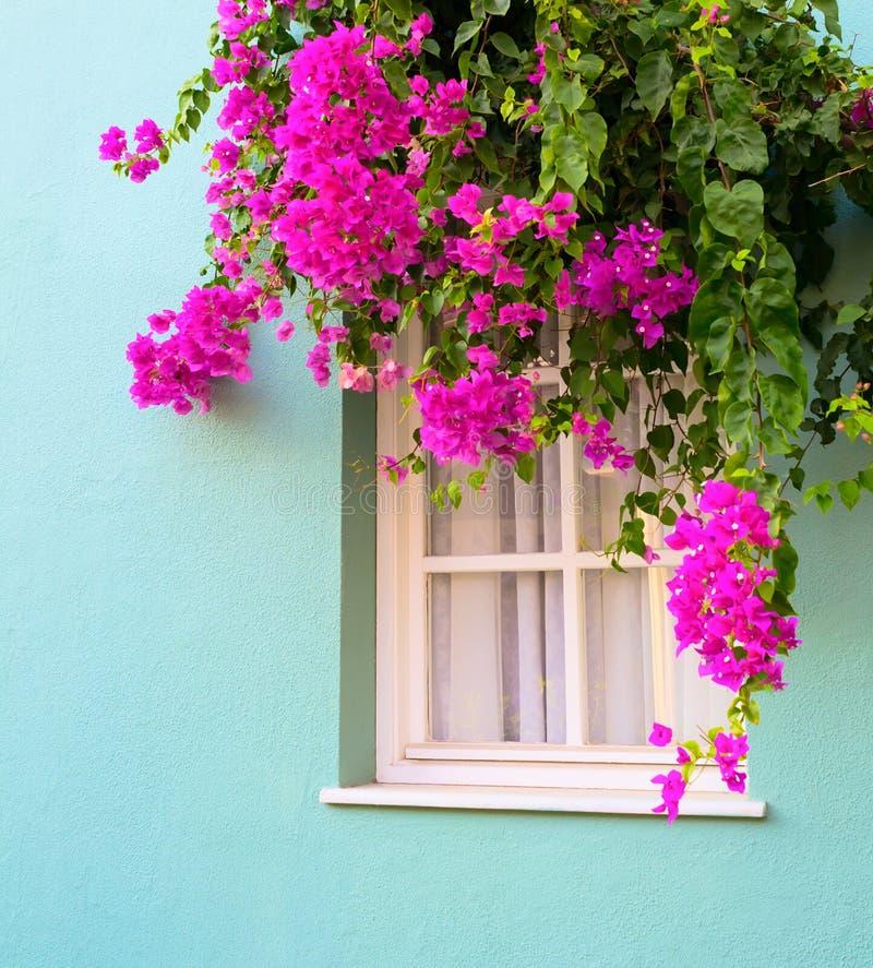 Fönster som inramas med nya blommor royaltyfri foto