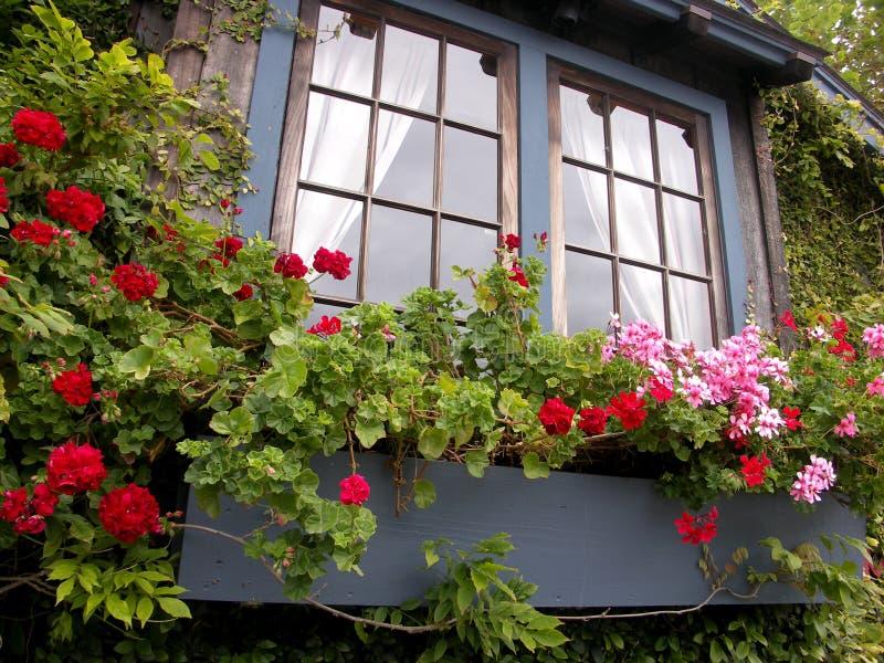 Fönsterask med blommor royaltyfria foton