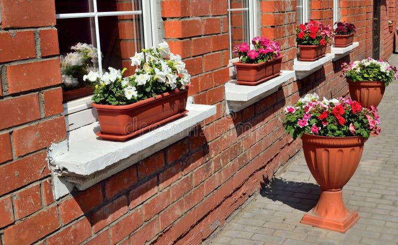 Fönstergarnering med blommor fotografering för bildbyråer