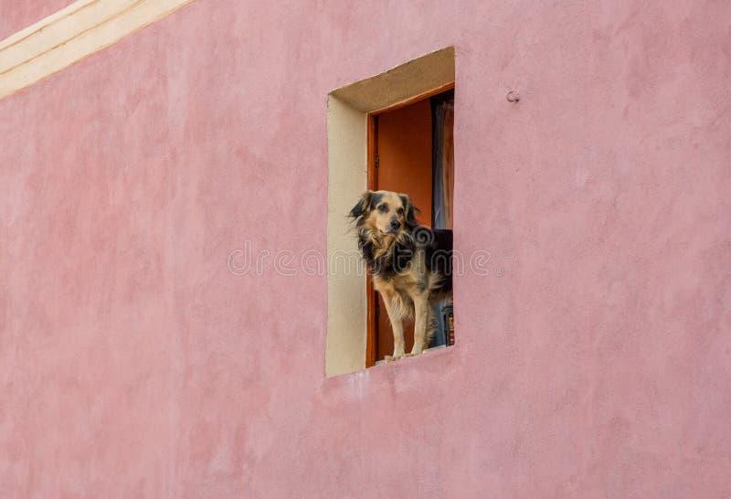Fönsterhund royaltyfri bild