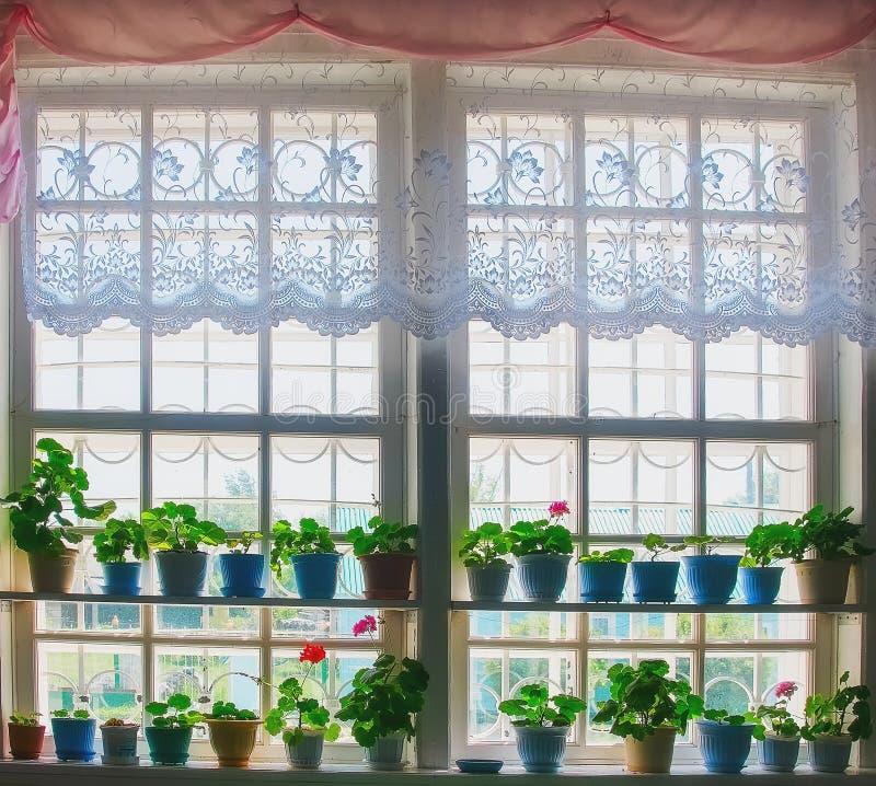 Fönsterväxter på ett fönster arkivbild