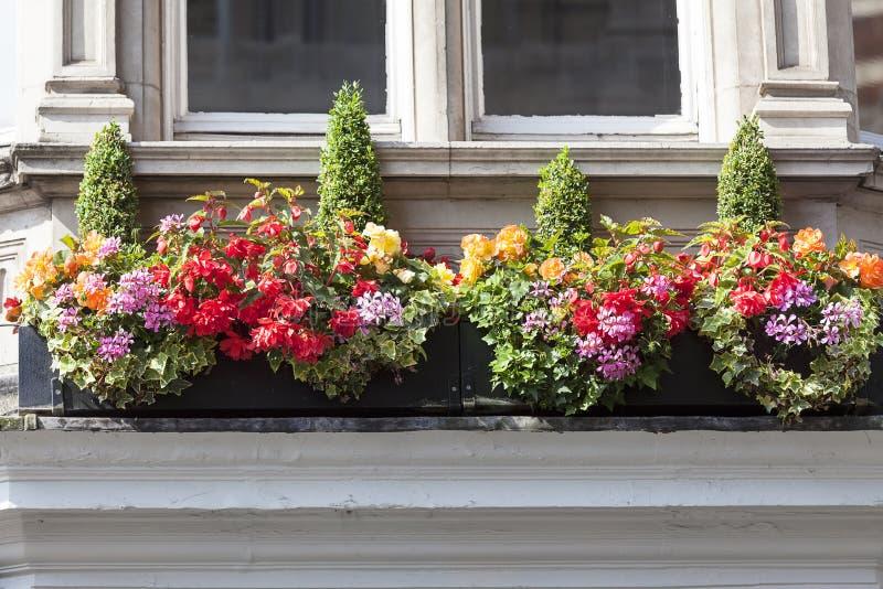 Fönstret dekorerade med blommor, dekorativ grönska, den typiska sikten av den London gatan, London, Förenade kungariket royaltyfri bild
