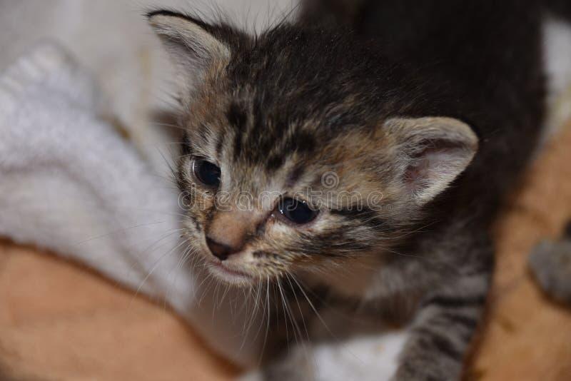 Föräldralös Bottlefed kattunge: Änglar med Piranhatänder och jordluckrare royaltyfri bild