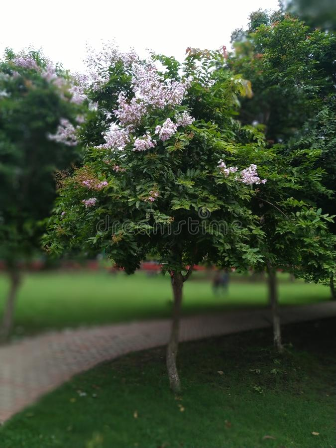 Förälskelse är ett träd precis som kamratskap royaltyfri bild