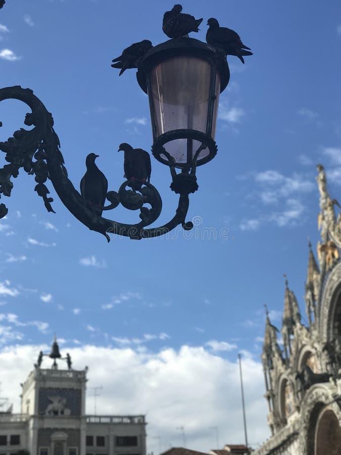 Förälskelse i den San Marco fyrkanten, Venedig royaltyfria bilder