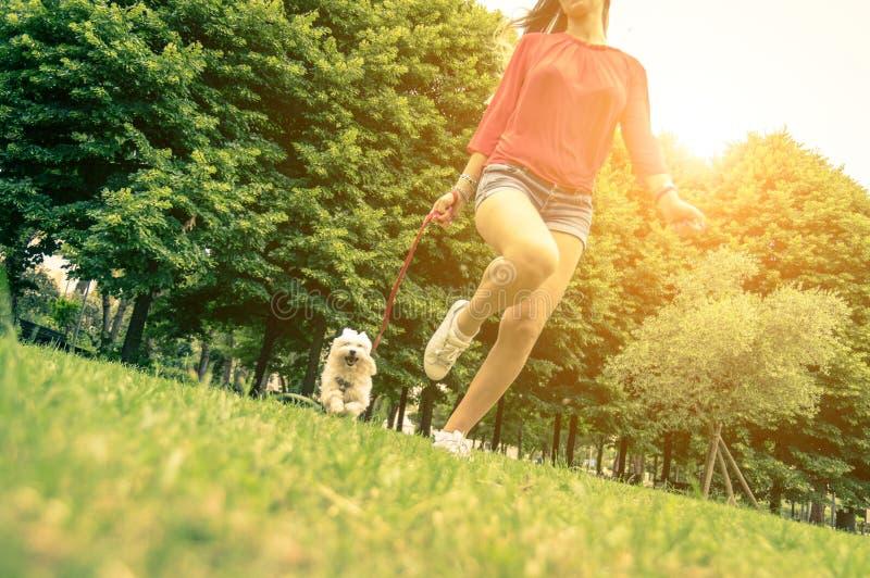 Förälskelse mellan människan och hunden royaltyfri fotografi
