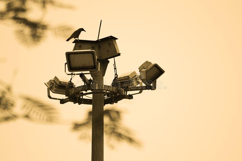 Förälskelsefågel arkivbild