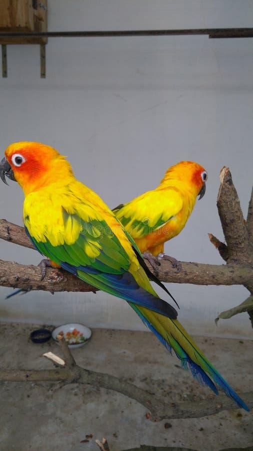 Förälskelsefåglar och en tree royaltyfria bilder