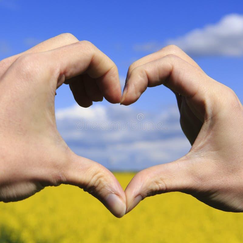 Förälskelseformhänder - hjärta på gult fält och blå himmel royaltyfri bild