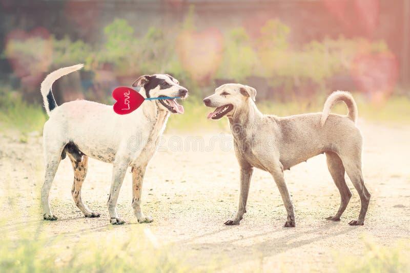 Förälskelsehund arkivbild