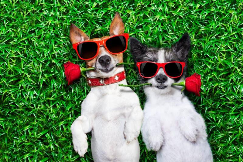 Förälskelsepar av hundkapplöpning royaltyfri bild