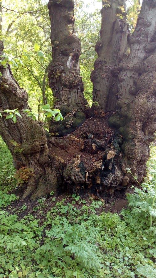 Förändra Baum royaltyfria foton