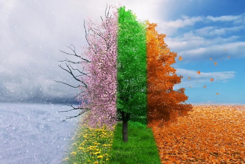 För ändringsbegrepp för fyra säsong träd arkivfoto