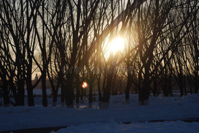  för Ð'ÐΜÑ€ÐΜÐ-² ÑŒÑ, mörka träd arkivbilder