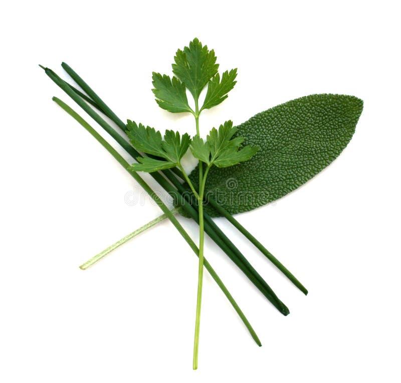 för örtparsley för gräslökar ny vis man royaltyfri bild