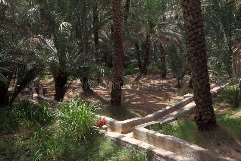 för aldhabi för abu ain oas royaltyfri foto