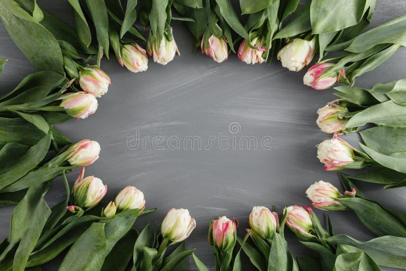 För Art Floral Background Round Frame för vita nya vårtulpan botanisk hälsning för dag för ` s för kvinna för begrepp för lösa bl royaltyfria bilder