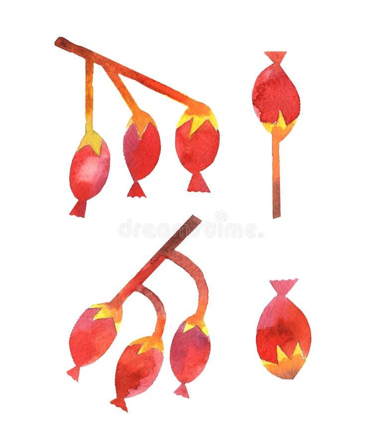 för bärfilial för vattenfärg röd samling stock illustrationer