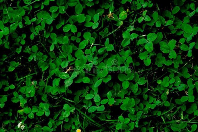 För bakgrundstextur för grönt gräs bakgrund arkivfoto