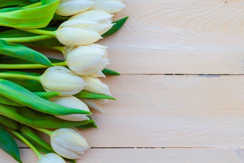 För bakgrundsvår för konst trädesign för abstrakta tulpan royaltyfria bilder