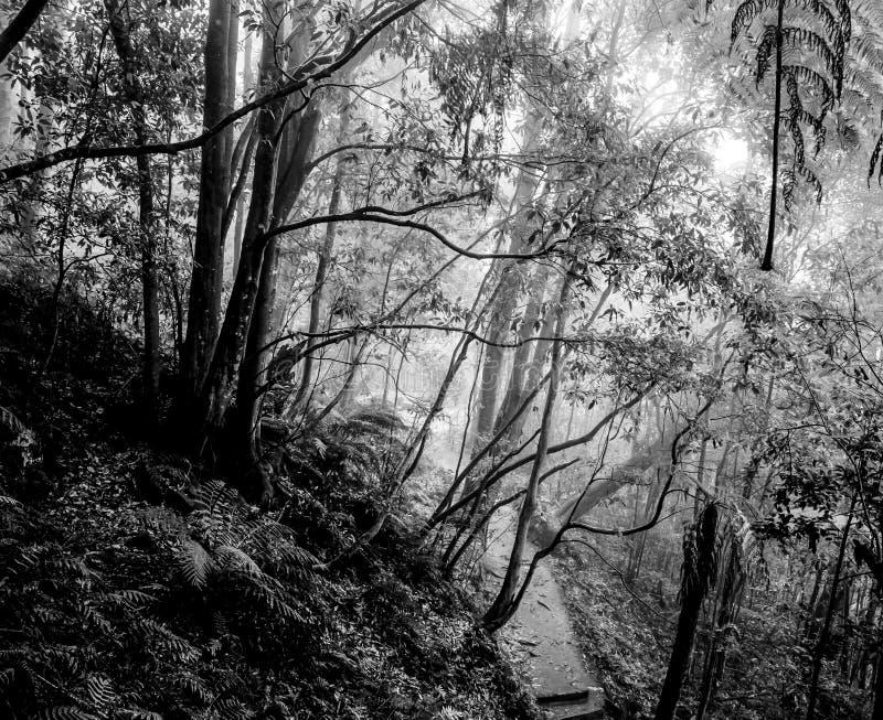 För bergKatoomba för dimmig regnig atmosfär blå monokrom för dag för landskap för skog nationalpark arkivbilder