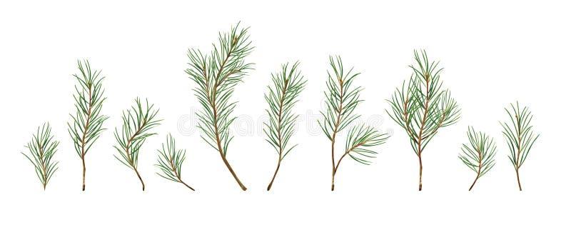 För beståndsdeluppsättning för vektor märkes- samling av den gröna naturliga skogen stock illustrationer