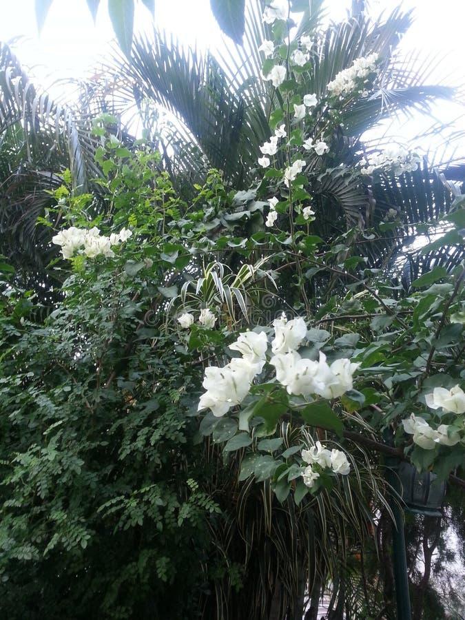 för bladblommor för bakgrund härlig trädgård royaltyfri foto
