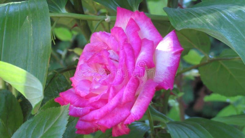 för bladblommor för bakgrund härlig trädgård royaltyfri bild