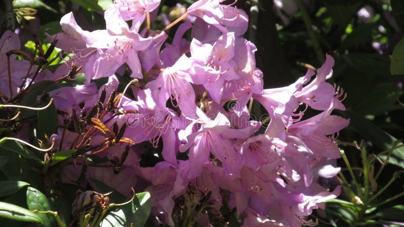 för bladblommor för bakgrund härlig trädgård arkivfoton