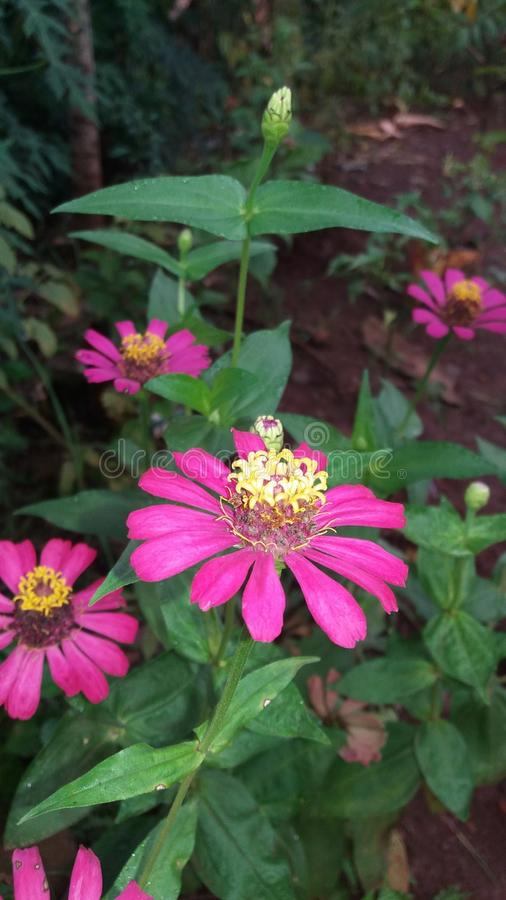 för bladblommor för bakgrund härlig trädgård fotografering för bildbyråer