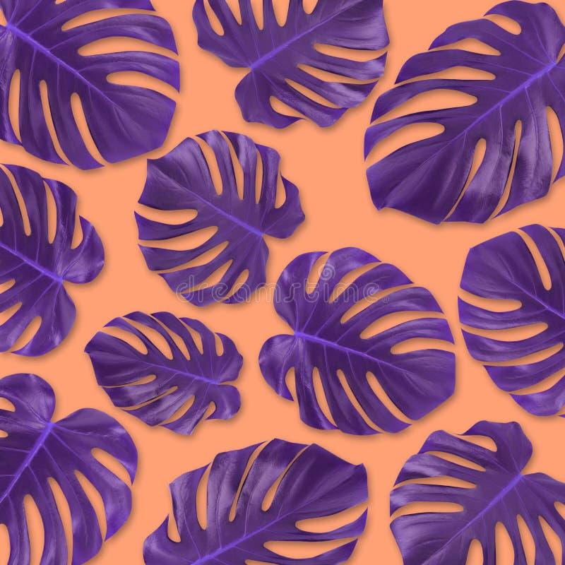 För bladmonsteraen för modellen lägger den purpurfärgade tropiska lägenheten på pastellfärgad orange bakgrund Sommarbegreppskonst arkivbild