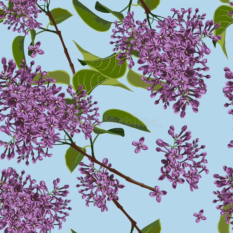 för blomma för japan Cherryclose för bakgrund blom- tree fjäder upp Filial av en blomstra lila sömlös modell royaltyfri illustrationer