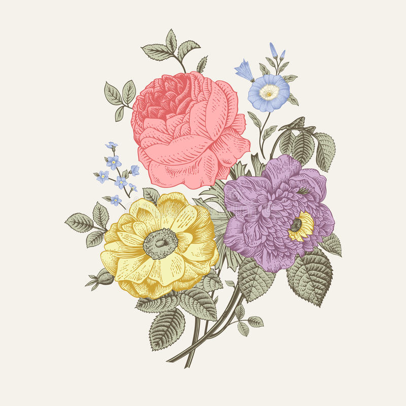 för blommairis för svart kort kulör blom- white royaltyfri illustrationer