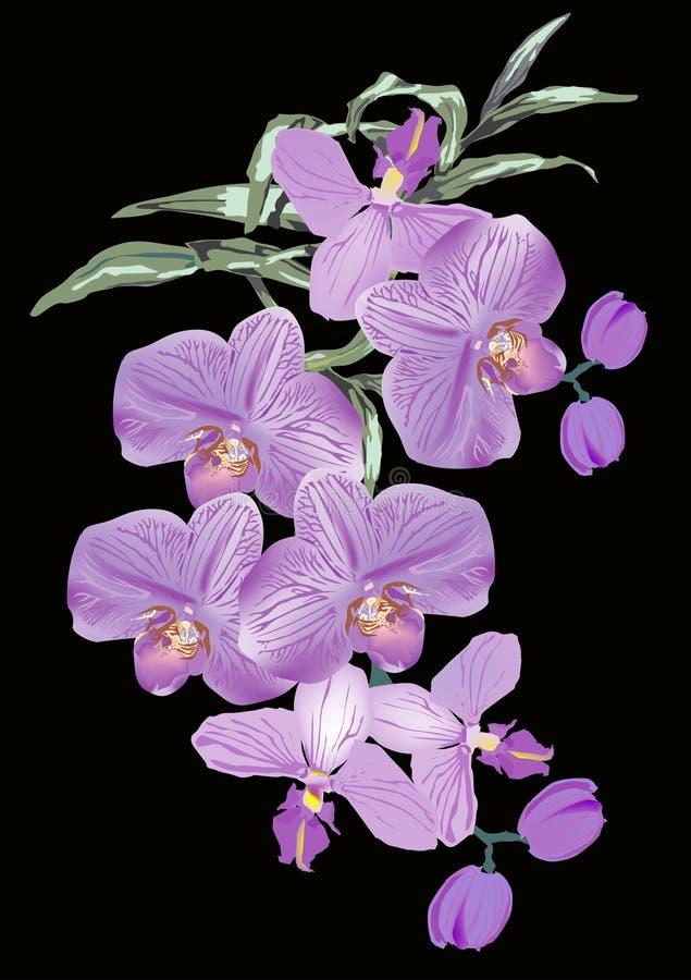för blommalila för bakgrund svart orchid stock illustrationer