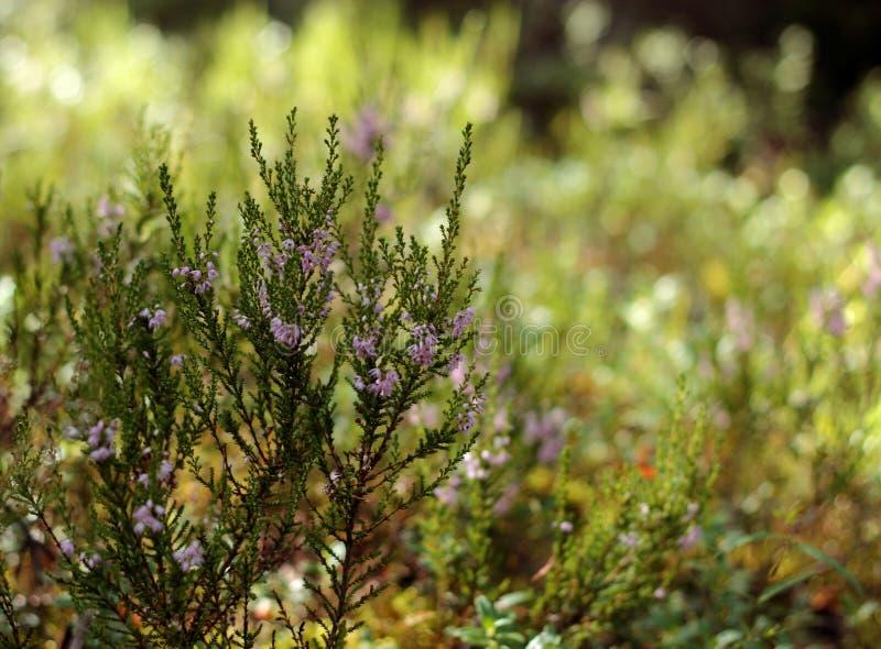 för blommaskog för bakgrund härlig lampa för illustration fotografering för bildbyråer