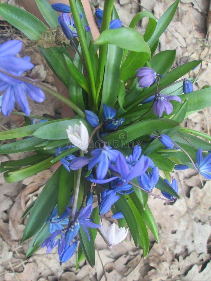 för blommaskog för bakgrund härlig lampa för illustration royaltyfri foto