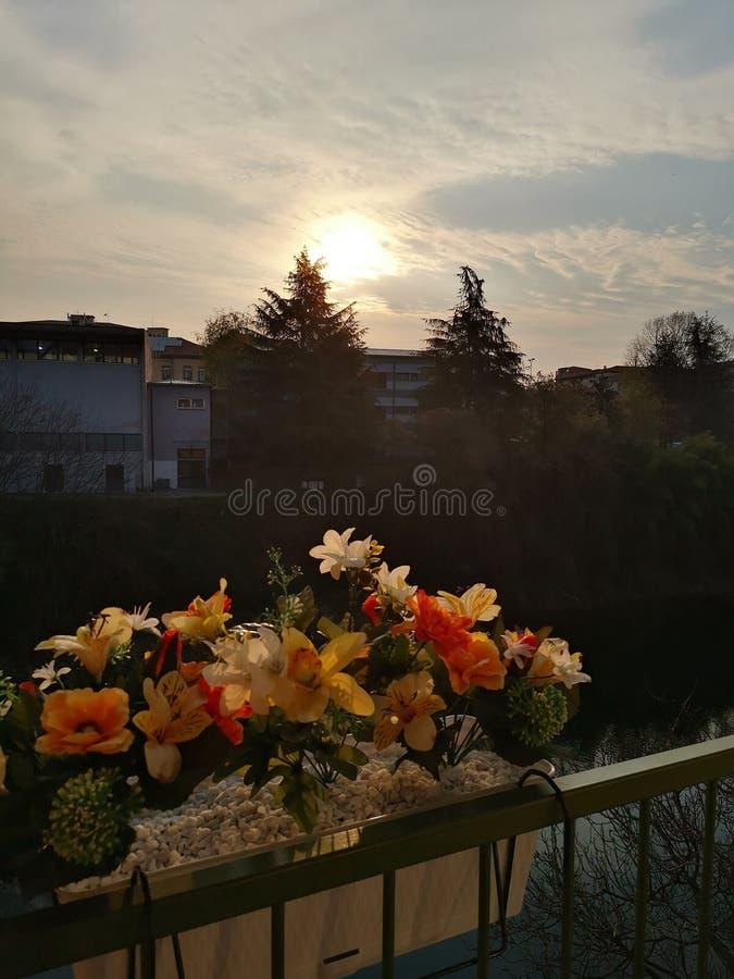 För blommasol för soluppgång röd guling för ljus himmel royaltyfria bilder