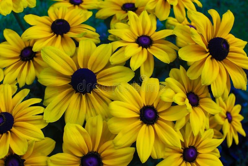 för blommor yellow mycket fotografering för bildbyråer