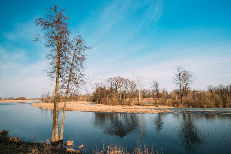 för blomninggreen för filial ljus tree för fjäder för natur Trädträn som står i vatten under en vårflod arkivfoton