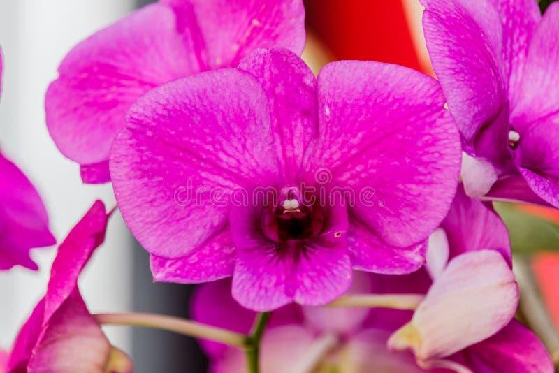 för blurfokus för bakgrund selektivt härligt val för orchid Selektivt fokusera arkivfoton