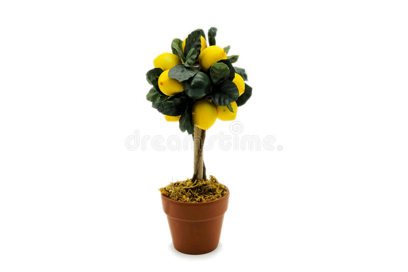 för citronreproduktion för bok botanisk tappning för tree royaltyfri bild