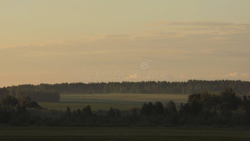 by för dal för livstidsliljamorgon fortfarande royaltyfri bild