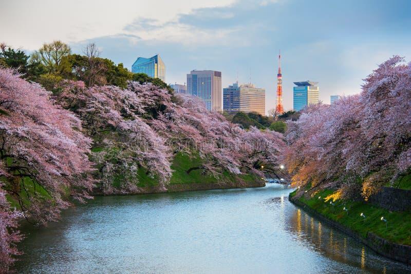 för den japan för byggnader för lägenhetarkitekturbyggnad towers det konkreta glass höga tokyo för stål moderna bostadsstigningen arkivbilder