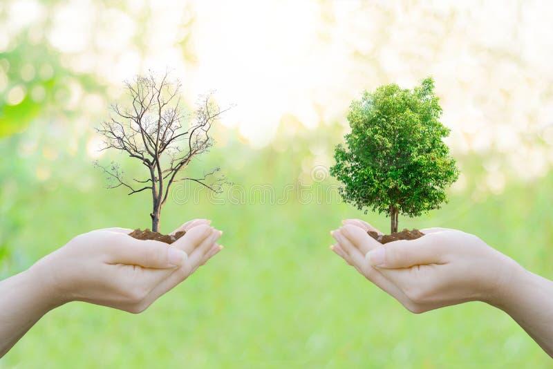 För ekologibegreppet för dubbel exponering människan räcker innehavet arkivbild