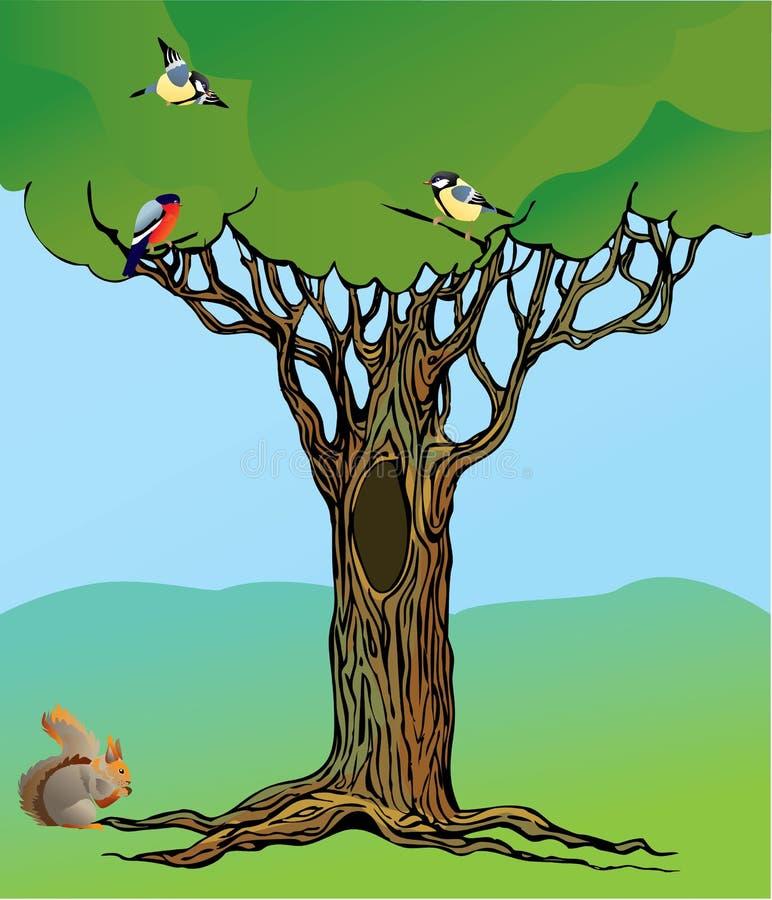 för ekorresaga för fåglar felik oak rotad tree royaltyfri illustrationer