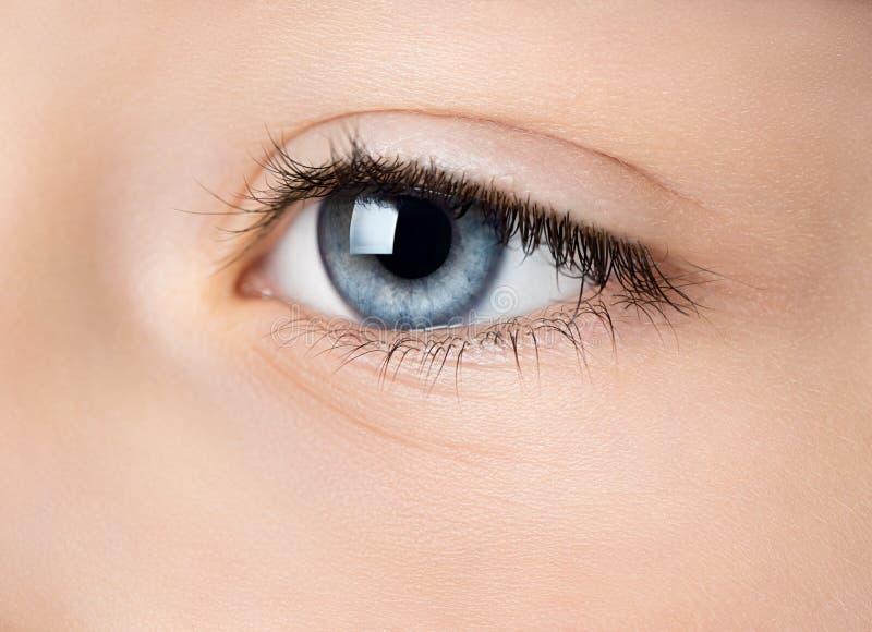 för eos-öga för kamera 20d skytte för makro mänskligt royaltyfria bilder