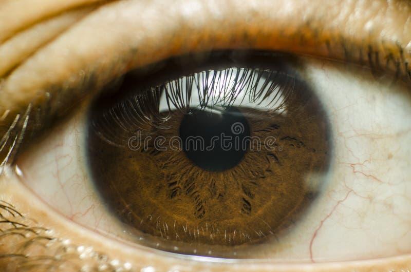 för eos-öga för kamera 20d skytte för makro mänskligt arkivbild