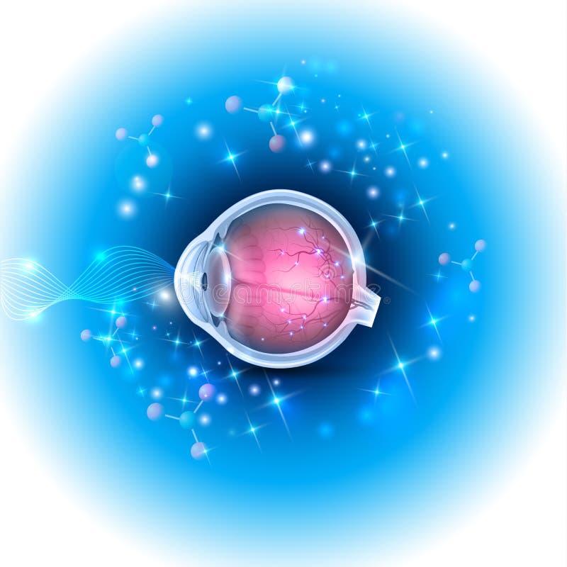 för eos-öga för kamera 20d skytte för makro mänskligt vektor illustrationer
