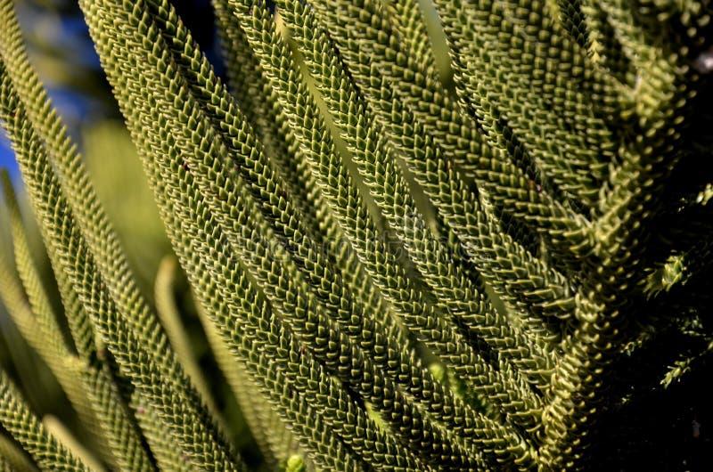 För evigt gör grön trädsidor royaltyfri foto